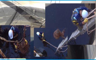 Trabajos Correctivos: Instalación de bomba en el homogenizador